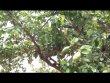 공원일기 합한목 자귀나무,감,모과, 장미