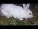 오륜공원 토끼