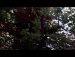 공원일기 장미 바람부는 나무