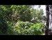 공원일기 영지버섯 매미껍질 뇌화풍괘 상효 인용